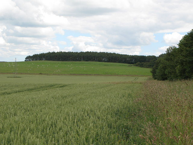 Arable land and woods, Corbridge Common (2)