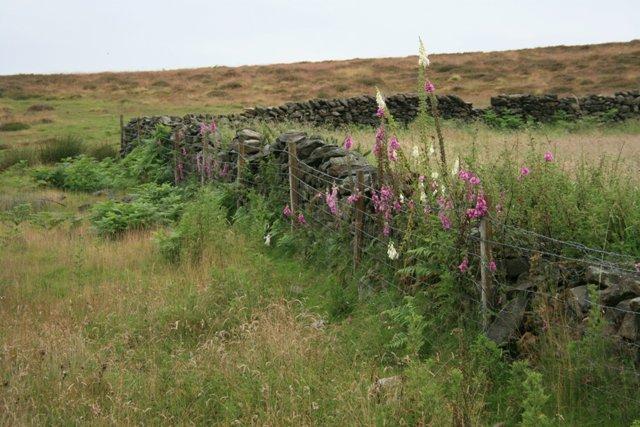 Wall Corner, Bainwood Head