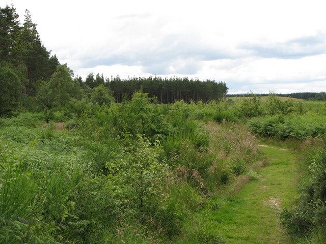 Bridleway in Seventy Acre Wood