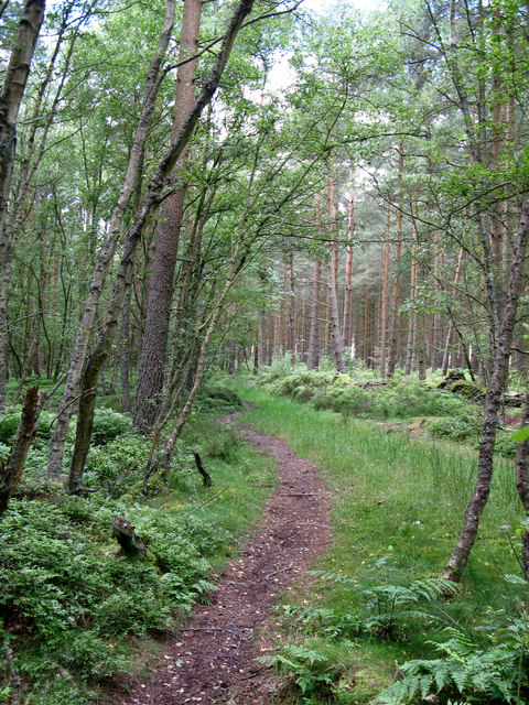 Path in Seventy Acre Wood