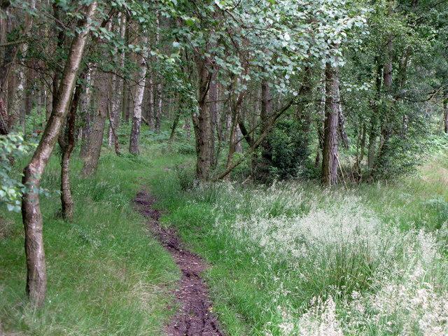 Path in Dipton Wood