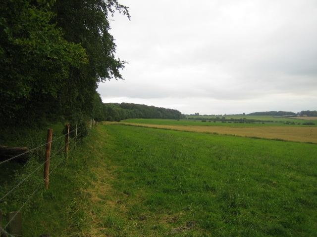 Farmland and woods near Hindon