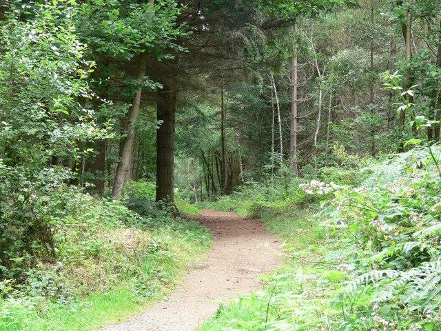 Footpath through Hawkbatch Valleys.