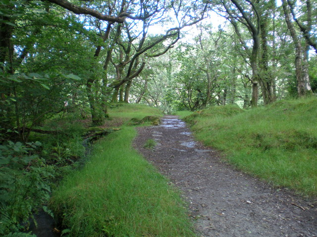 Lower path from Dolgoch Station.