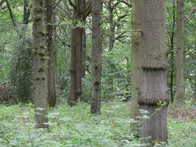 Seckley Wood