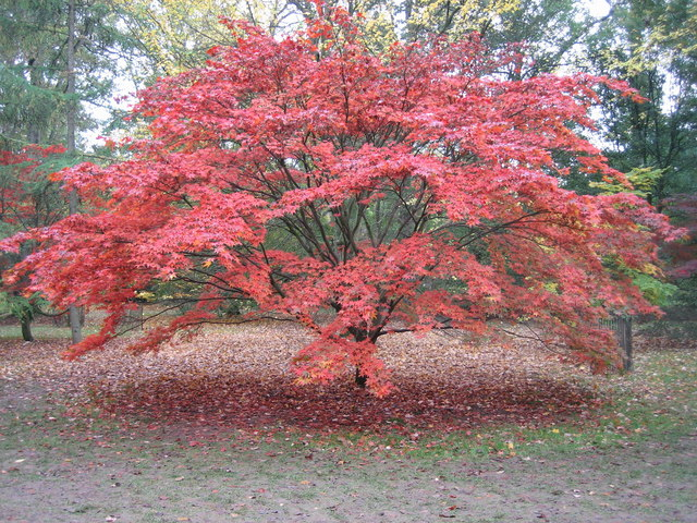 Another magical autumn in Acer Glade, 2006