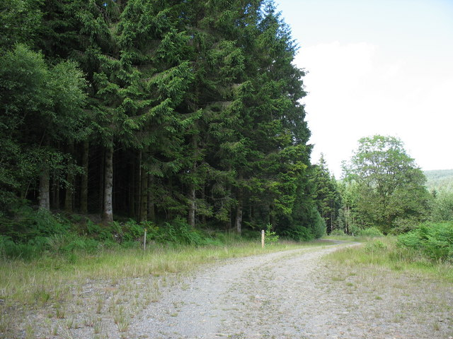 A double bend in the forest road