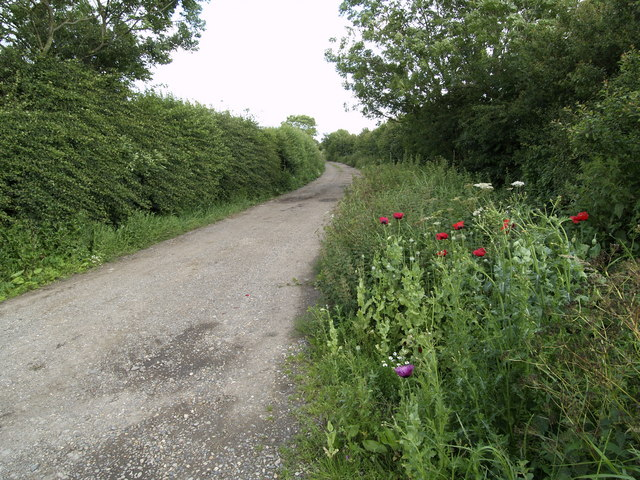 Longbrough Lane and Wild Poppies