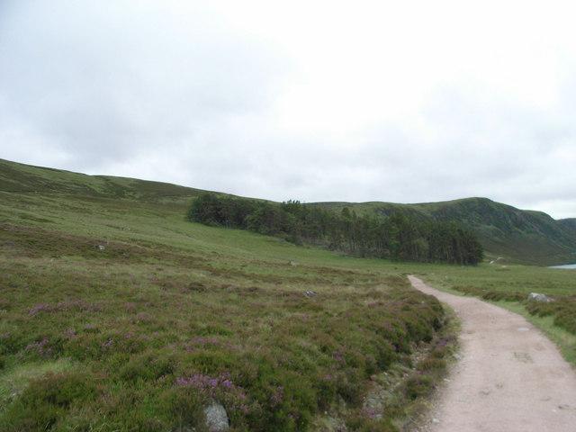 Small Wood beside Loch Muick