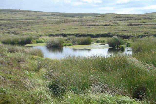 Peatland Pool