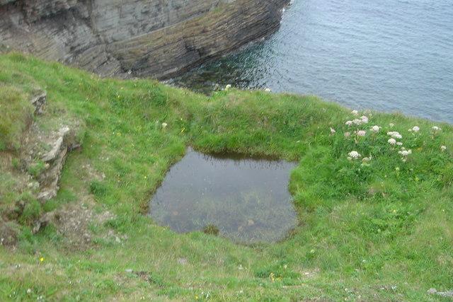Otter pool