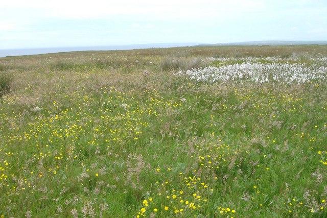 Coastal Grassland
