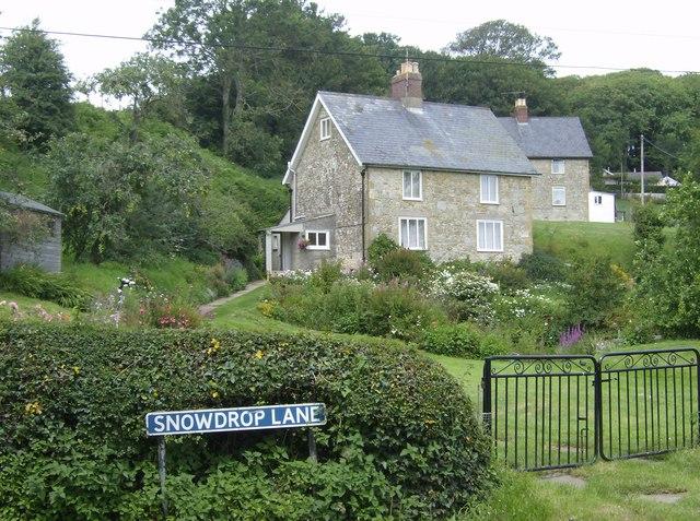 Snowdrop Lane