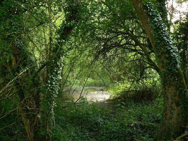 Wootton Bassett Mud Springs (1)