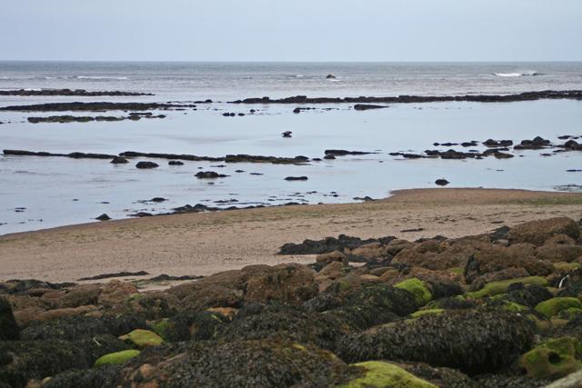 The beach at Grisethorpe