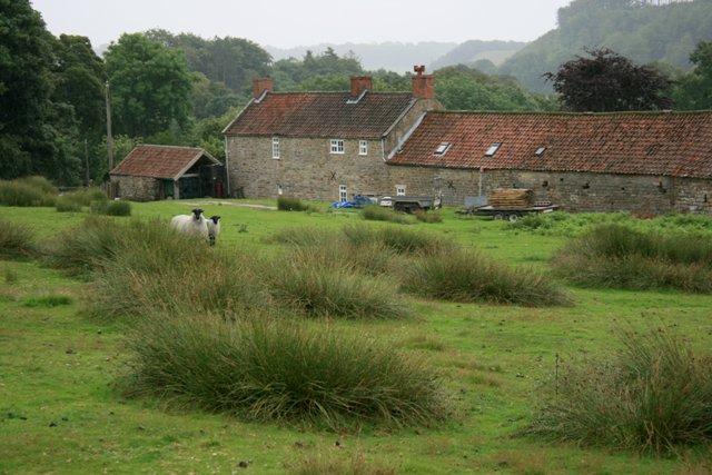 Camomile Farm