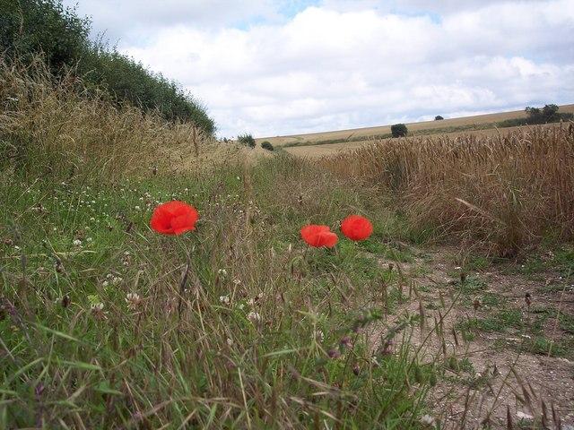 Field side Bridleway