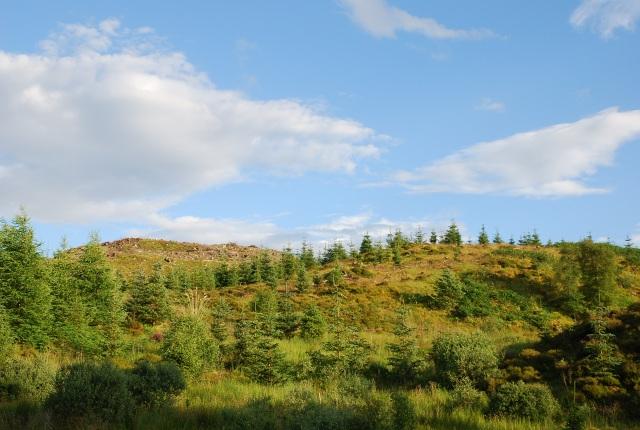 In Achnabreck Forest