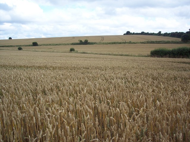 View across Handley Down