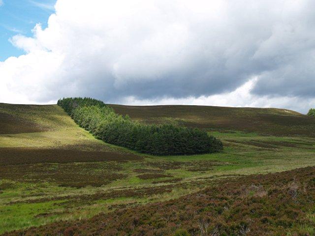 Belt of trees, Moss of Glanny