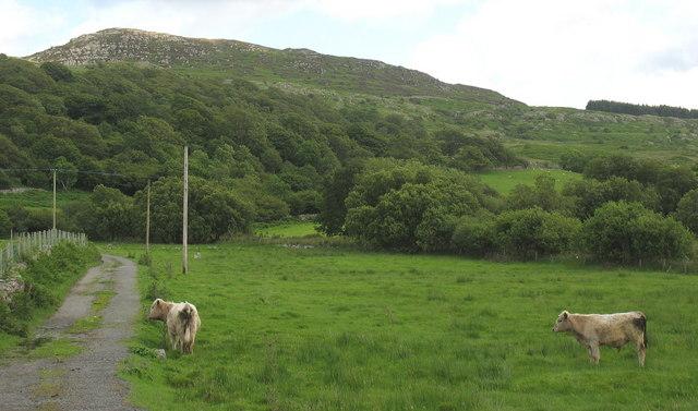 The wooded hillside above Tyddyn-du