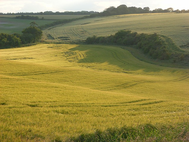 Nutfield Down