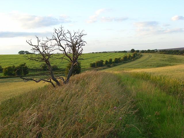 Farmland, East Ilsley