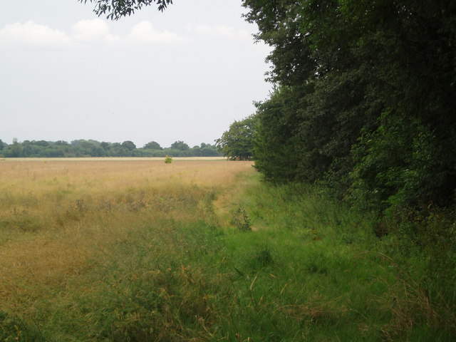 Woodland and Field boundary