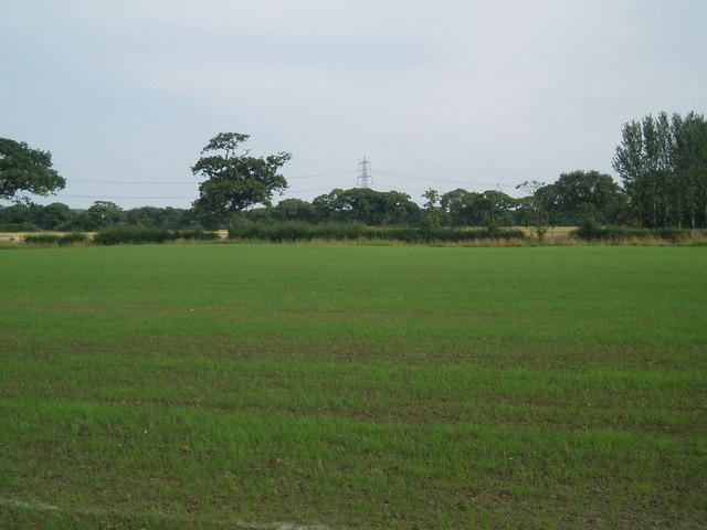 Fields and Hedgerow near Glebe Farm
