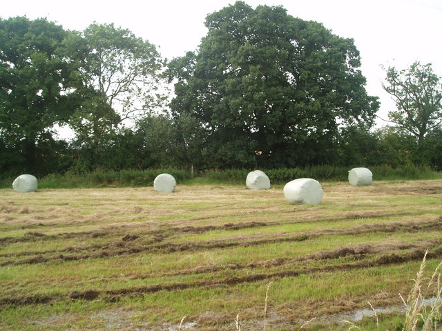 Haylage bales at Blue Slates Farm