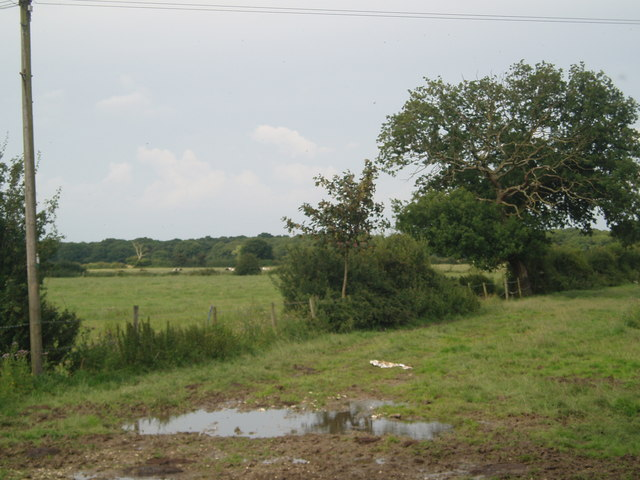 Hedgerow between fields
