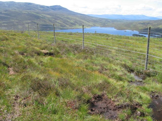 New plantation above Loch Errochty