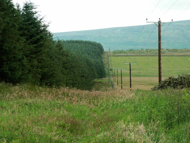 Plantation and poles