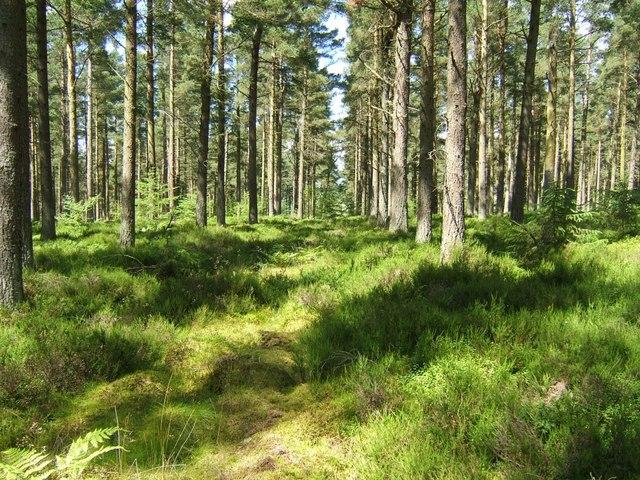 Narrow ride, Birkenside Wood