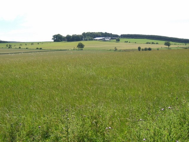 Large field of seeding grasses near Dolphinston