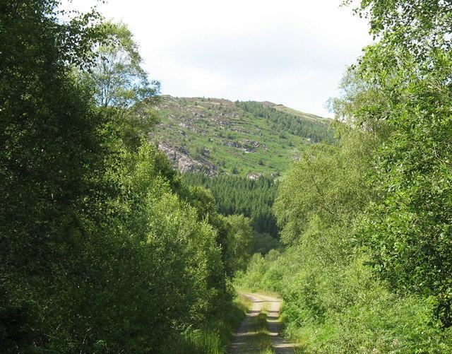 Forest road leading north towards Craig y Penmaen
