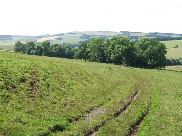 Peel Clumps, near Mossburnford