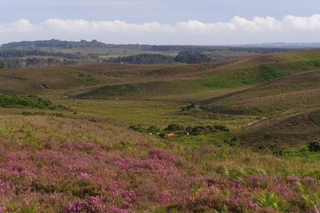Heathland view over Broad Bottom, New Forest