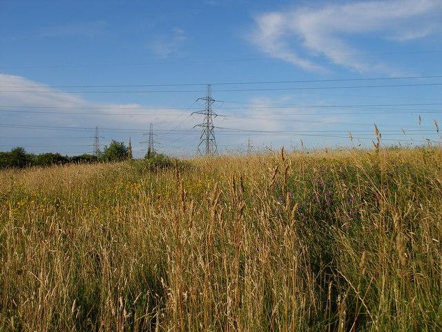 Across the wildflower meadow towards the pylons