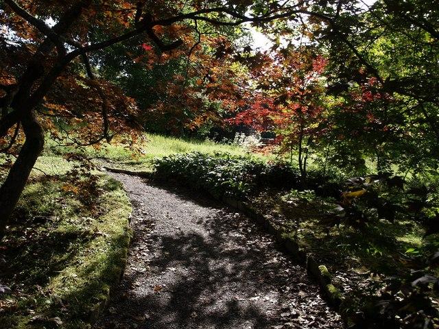 Acers at Dartington