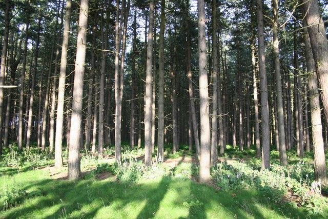 Wigsley Wood