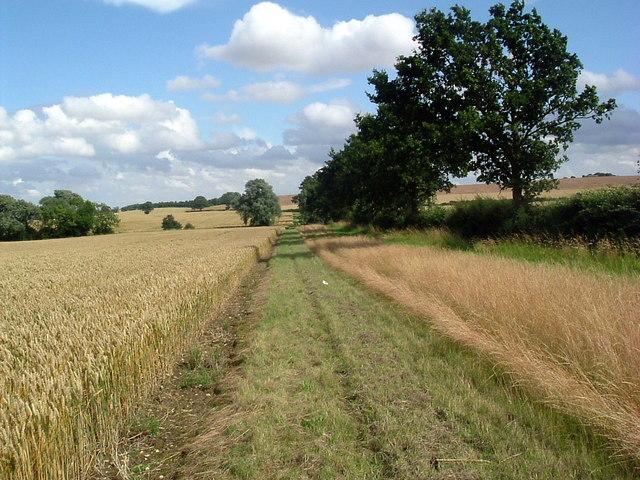 Footpath alongside wheatfield