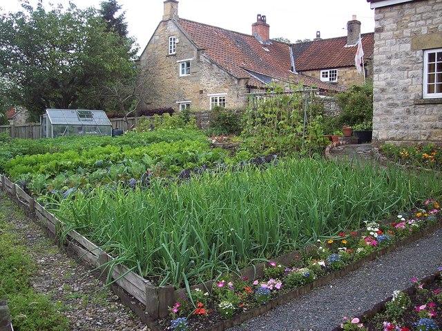 Vegetable Plot, Hutton-le-Hole