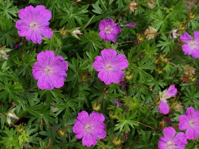 Wildflowers at Portencross