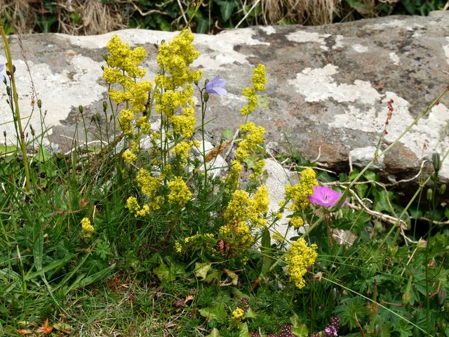Wildflowers at Portencross