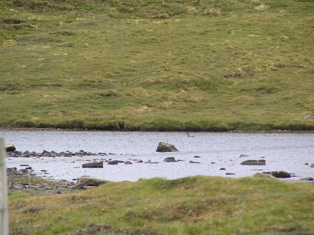 Small loch below Crogans with Red-throated diver.