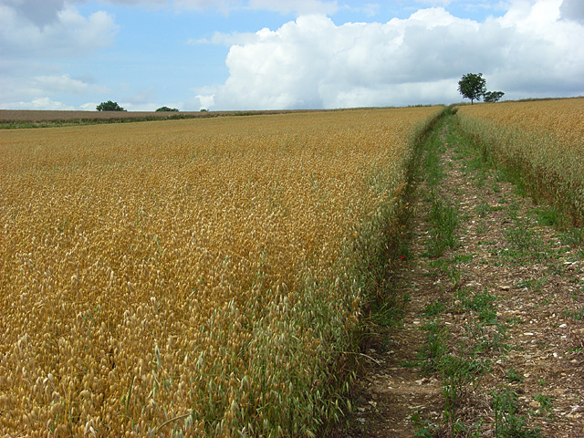 Farmland, East Garston