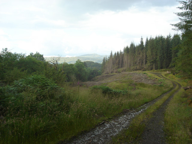 Looking northeast along forestry track at western edge of Fearnoch Forest