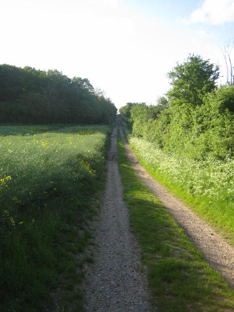 Bridleway near Coppice Lowhill Farm, Botolph Claydon