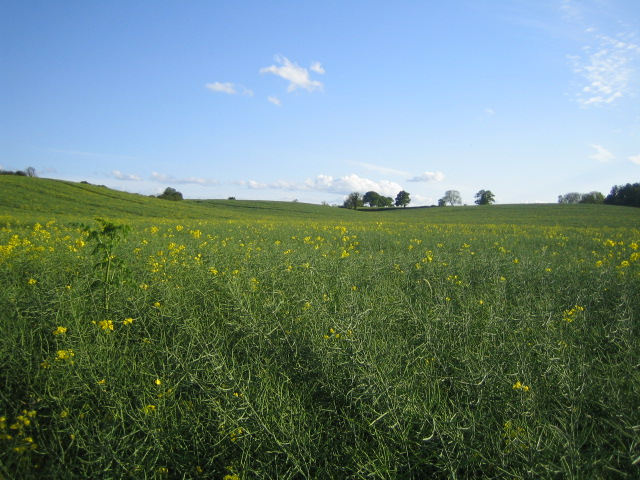 Field near Coppice Lowhill Farm, Botolph Claydon